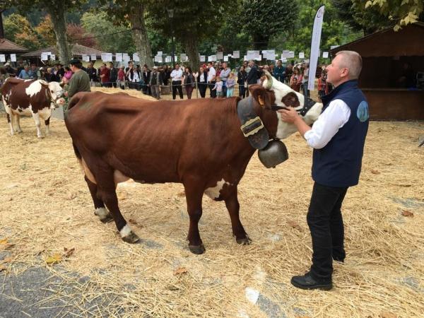 thones,foire,saint-maurice,vache,agriculture