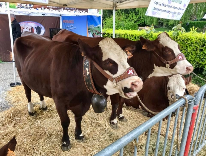 annecy,reblochon,haras,tardy,vache,upra,sir,agriculture