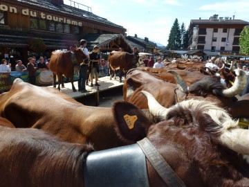 le grand-bornand,foire,agriculteur,reblochon,vache,concours