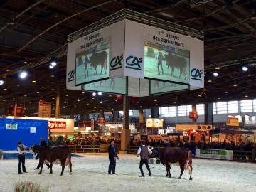 Concours général race Abondance et Tarentaise5.jpg