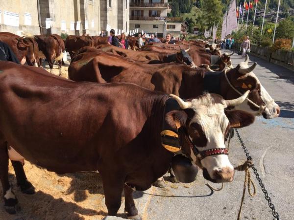le grand-bornand,vache,agriculture,foire,eleveur