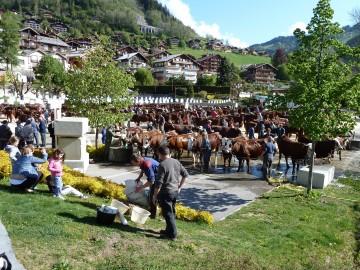 grand-bornand,foire,vache,reblochon,concours,agriculture
