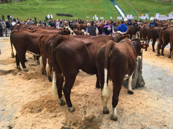 la clusaz,fete,vache,concours,reblochon,agriculture