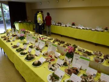 annecy,exposition,champignon