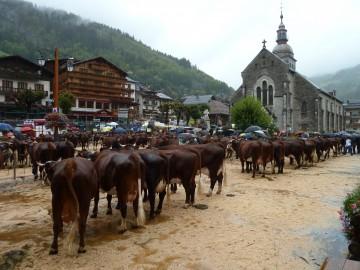 grand-bornand,foire,saint-maurice,agriculture,vache,reblochon