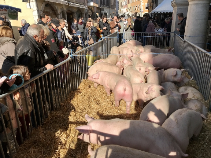 annecy,acion,cochon,fete,association,agriculture