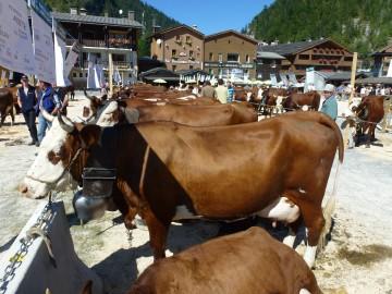 la clusaz,foire,vache,agriculteur,reblochon